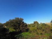 2.030 sqm plot in Roussospiti for sale