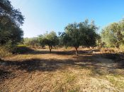 4277 sqm Plot in Kokkino Chorio for sale